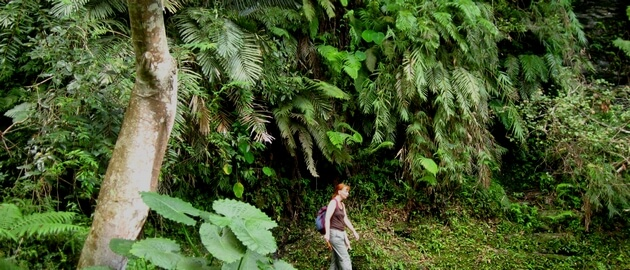 Hiker in dense forest